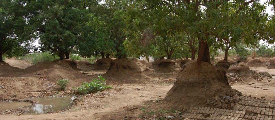 Mango orchard in South Darfur (Unep)