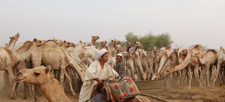 A camel herder of the Baggara tribe in Darfur (file photo)