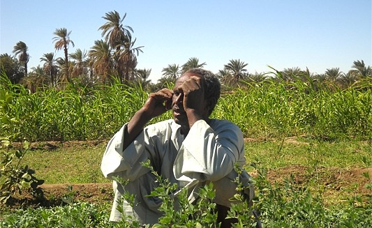 A farmer in Dongola, Northern State (The Niles)