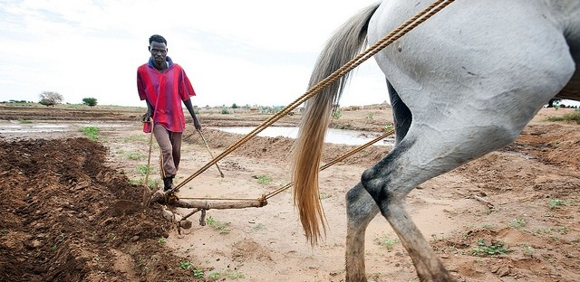 A displaced farmer works on his rented plot in Tawila locality, North Darfur, September 2011 (Albert González Farran/Unamid)