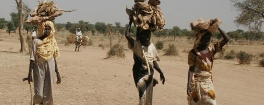 Darfuri women carrying firewood (ATC-Caritas)