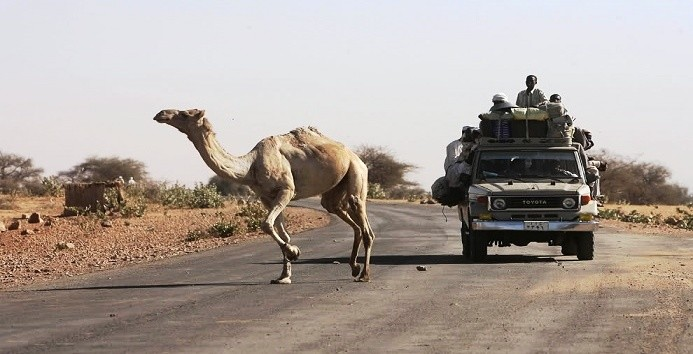 A camel crossing the road near Zamzam camp for the displaced in El Fasher, capital of North Darfur, March 2009 (Zohra Bensemra/Reuters)