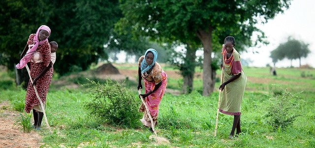 Darfuri women tending their farm (Unamid)