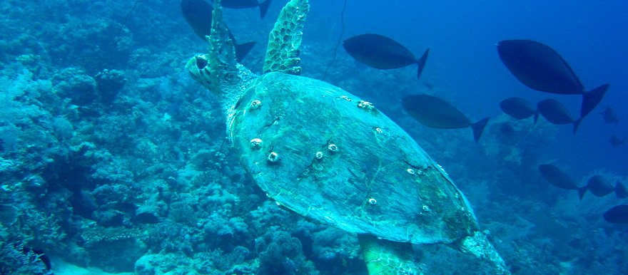 Life in the Red Sea (postconflict.unep.ch)