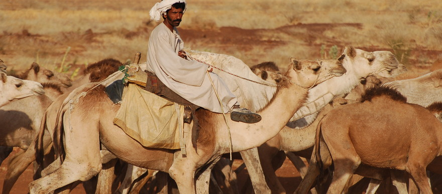 Eastern Sudanese herder with his camels in El Butana (postconflict.unep.ch)