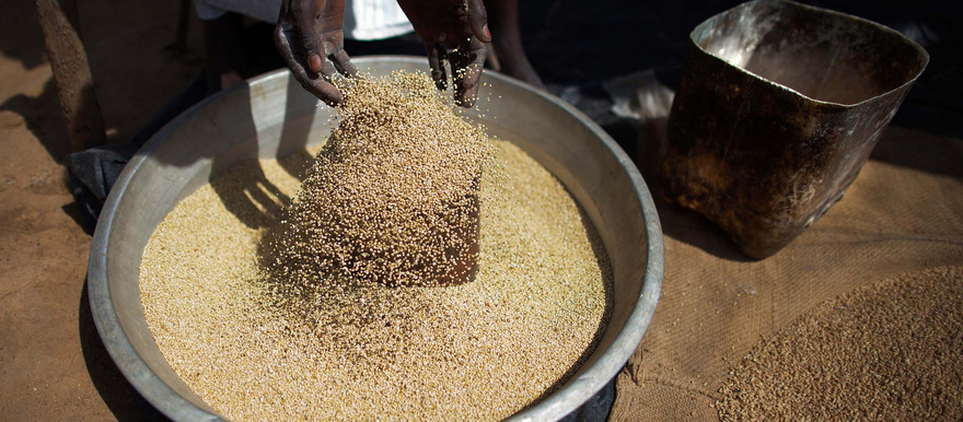 A miller selects the grain to obtain flour with his automatic mill in Al Moashi market in El Fasher, North Darfur (Albert González Farran/UNAMID)