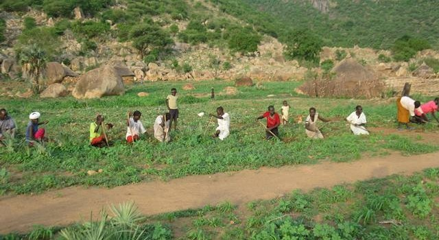 Farming in the Nuba Mountains in South Kordofan (nrrdo.org)