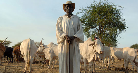 A Dinka herder with his cows in Abyei (File photo: aljazeera.com)