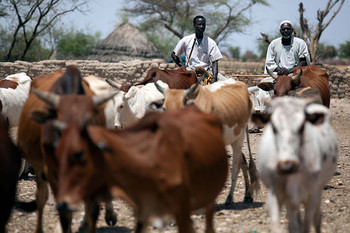 Herders guide their cattle to a water point in South Darfur (File photo: Albert González Farran / Unamid)