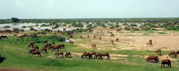 West Kordofan (file photo)