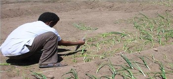 A farmer in Sudan's Northern State (File photo)