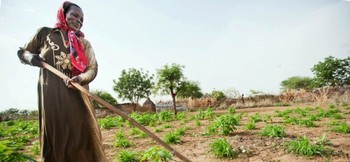 A woman tending her crops in Darfur (File photo)