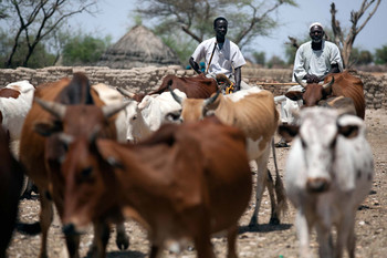 Herders lead their cattle to a water point provided by Unamid in a camp for the displaced in South Darfur (Albert González Farran/Unamid)