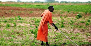 A woman tends her farm in Darfur (file photo)