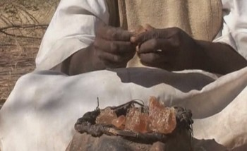 A farmer selling gum Arabic collected from the acacia Senegal tree (file photo)
