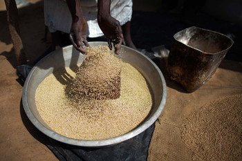 A miller selects the grain to obtain flour with his automatic mill in Al Moashi market in El Fasher, North Darfur. (File photo by Albert González Farran / Unamid)