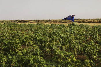 A farm in Sudan's El Gezira (File photo: Tim Mckulka)