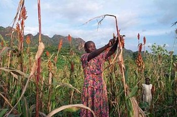 A woman farmer in South Kordofan (Wikipedia)
