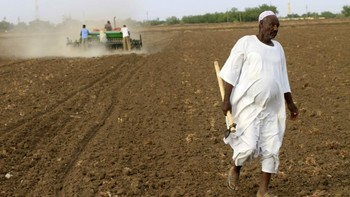 Farmers in Sudan (alaraby.co.uk)
