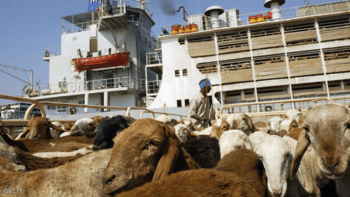 Livestock beinng loaded for export in Port Sudan (File photo)