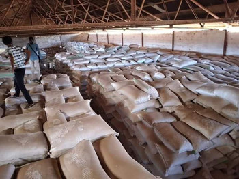 Sacks of wheat found hidden in stores of the Kosti Meat Company on Monday (Social media)