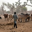 A herder with his cattle in El Sareif Beni Hussein locality, North Darfur (Albert González Farran/Unamid)