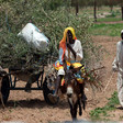 Donkey cart loaded with firewood (Albert González Farran/Unamid)