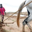 A displaced farmer works on his rented plot in Tawila locality, North Darfur (Albert González Farran/Unamid)