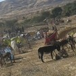 Displaced residents of Jebel Marra in Darfur shelter in camps after fleeing from the aerial bombardments in the mountains (Radio Dabanga correspondent)