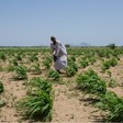 Farming in Sudan (File photo: Gabriela Vivacour-WFP)
